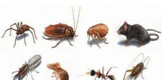 diệt-côn-trùng