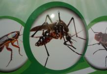 diệt côn trùng tại HCM