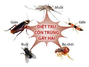 diet-con-trung